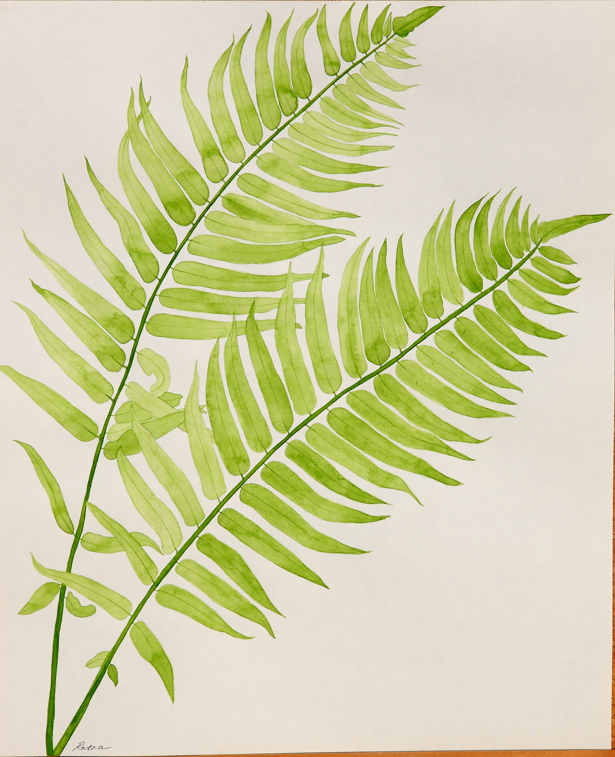 Fern Drawing Lucknowi ...